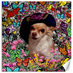 Chi Chi In Butterflies, Chihuahua Dog In Cute Hat Canvas 16  X 16   by DianeClancy