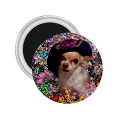 Chi Chi In Butterflies, Chihuahua Dog In Cute Hat 2 25  Magnets by DianeClancy