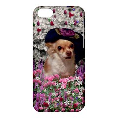 Chi Chi In Flowers, Chihuahua Puppy In Cute Hat Apple Iphone 5c Hardshell Case by DianeClancy
