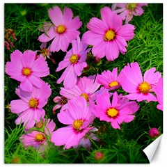 Cosmos Flowers Canvas 12  X 12   by artphoto