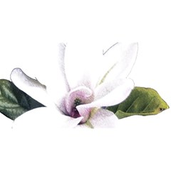 White Magnolia Pencil Drawing Art You Are Invited 3d Greeting Card (8x4) by picsaspassion