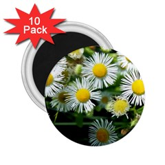 White summer flowers oil painting art 2.25  Magnets (10 pack)  by picsaspassion