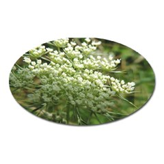 White summer flowers Oval Magnet by picsaspassion