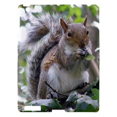 Gray Squirrel Eating Sycamore Seed Apple Ipad 3/4 Hardshell Case by GiftsbyNature