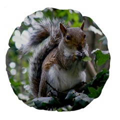 Gray Squirrel Eating Sycamore Seed Large 18  Premium Flano Round Cushions by GiftsbyNature