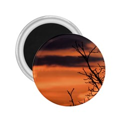 Tree Branches And Sunset 2 25  Magnets by picsaspassion