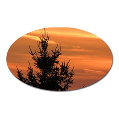 Christmas Tree And Sunset Oval Magnet by picsaspassion