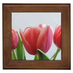 Red Tulips Framed Tiles by picsaspassion