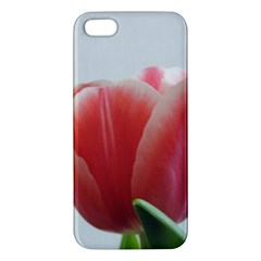Red Tulips Apple Iphone 5 Premium Hardshell Case by picsaspassion