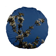 White Cherry Flowers And Blue Sky Standard 15  Premium Round Cushions by picsaspassion