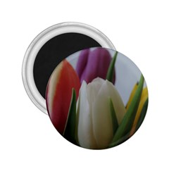 Colored By Tulips 2 25  Magnets by picsaspassion