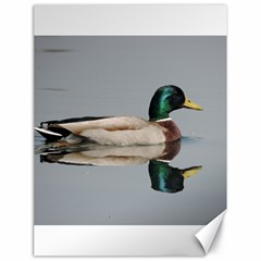 Wild Duck Swimming In Lake Canvas 18  X 24   by picsaspassion