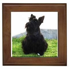 Scottish Terrier Sitting Framed Tiles by TailWags
