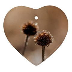 Withered Globe Thistle In Autumn Macro Ornament (heart)  by wsfcow