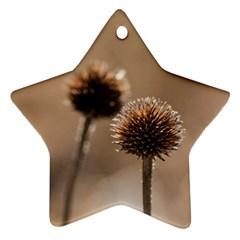 Withered Globe Thistle In Autumn Macro Ornament (star)  by wsfcow