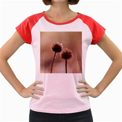 Withered Globe Thistle In Autumn Macro Women s Cap Sleeve T Shirt by wsfcow
