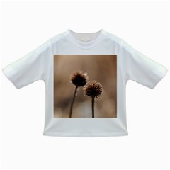 Withered Globe Thistle In Autumn Macro Infant/toddler T Shirts by wsfcow