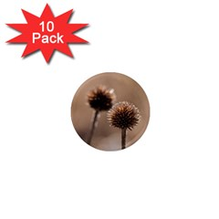 Withered Globe Thistle In Autumn Macro 1  Mini Magnet (10 Pack)  by wsfcow