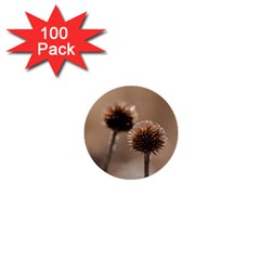 Withered Globe Thistle In Autumn Macro 1  Mini Buttons (100 Pack)  by wsfcow