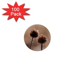 Withered Globe Thistle In Autumn Macro 1  Mini Magnets (100 Pack)  by wsfcow