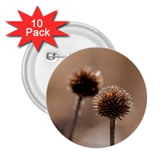 Withered Globe Thistle In Autumn Macro 2 25  Buttons (10 Pack)  by wsfcow