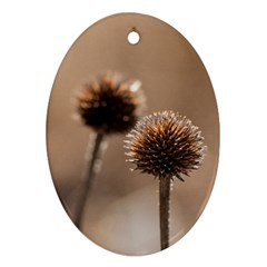Withered Globe Thistle In Autumn Macro Oval Ornament (two Sides) by wsfcow
