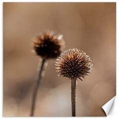 Withered Globe Thistle In Autumn Macro Canvas 16  X 16   by wsfcow