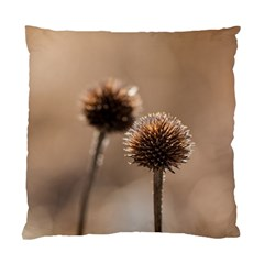 Withered Globe Thistle In Autumn Macro Standard Cushion Case (two Sides) by wsfcow