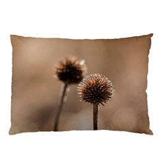 Withered Globe Thistle In Autumn Macro Pillow Case by wsfcow