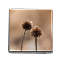 Withered Globe Thistle In Autumn Macro Memory Card Reader (square) by wsfcow