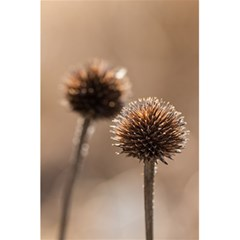 Withered Globe Thistle In Autumn Macro 5 5  X 8 5  Notebooks by wsfcow