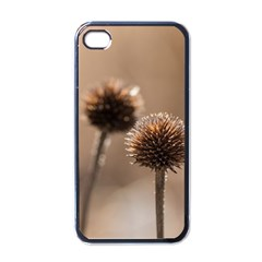 Withered Globe Thistle In Autumn Macro Apple Iphone 4 Case (black) by wsfcow
