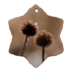 Withered Globe Thistle In Autumn Macro Snowflake Ornament (2 Side) by wsfcow
