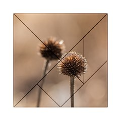 Withered Globe Thistle In Autumn Macro Acrylic Tangram Puzzle (6  X 6 ) by wsfcow
