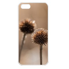 Withered Globe Thistle In Autumn Macro Apple Iphone 5 Seamless Case (white) by wsfcow