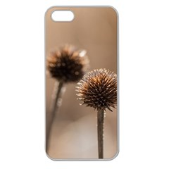 Withered Globe Thistle In Autumn Macro Apple Seamless Iphone 5 Case (clear) by wsfcow