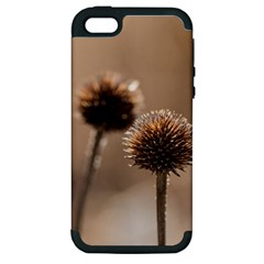 Withered Globe Thistle In Autumn Macro Apple Iphone 5 Hardshell Case (pc+silicone) by wsfcow