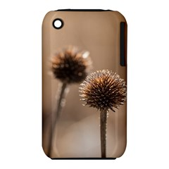 Withered Globe Thistle In Autumn Macro Apple Iphone 3g/3gs Hardshell Case (pc+silicone) by wsfcow