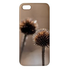Withered Globe Thistle In Autumn Macro Apple Iphone 5 Premium Hardshell Case by wsfcow