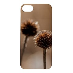 Withered Globe Thistle In Autumn Macro Apple Iphone 5s/ Se Hardshell Case by wsfcow