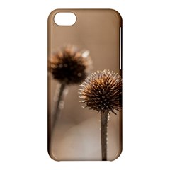 Withered Globe Thistle In Autumn Macro Apple Iphone 5c Hardshell Case by wsfcow