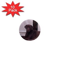 Chocolate Lab Laying 1  Mini Magnet (10 pack)  by TailWags