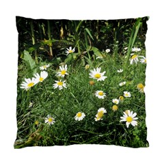 White Daisy Flowers Standard Cushion Case (two Sides) by picsaspassion