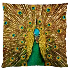 Bird Peacock Feathers Large Cushion Case (two Sides) by AnjaniArt