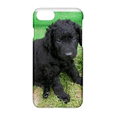 Curly Coated Retriever Puppy Apple iPhone 7 Hardshell Case by TailWags