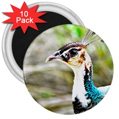 Peahen 3  Button Magnet (10 Pack) by MOOI