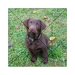 Chocolate Lab Pup Acrylic Tangram Puzzle (6  x 6 ) by TailWags