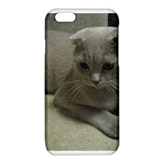 Scottish Fold Laying second iPhone 6/6S TPU Case by TailWags