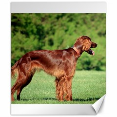 Irish Setter Full Canvas 8  x 10  by TailWags