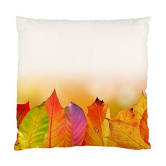 Autumn Leaves Colorful Fall Foliage Standard Cushion Case (two Sides) by Amaryn4rt